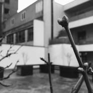 urban buds