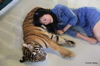 Tiger Kingdom, Chiang Mai 9