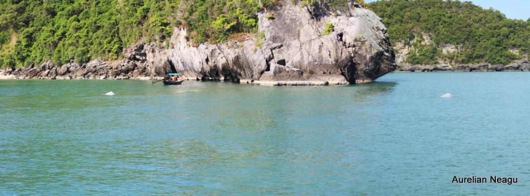 delfinii_Golful_Thailandei_1