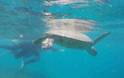 Oscar the turtoise