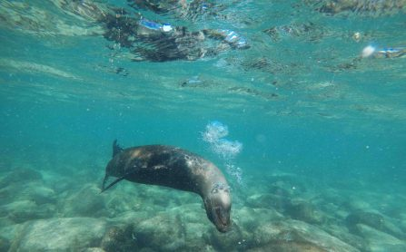 Swimming with sea lions for the first time