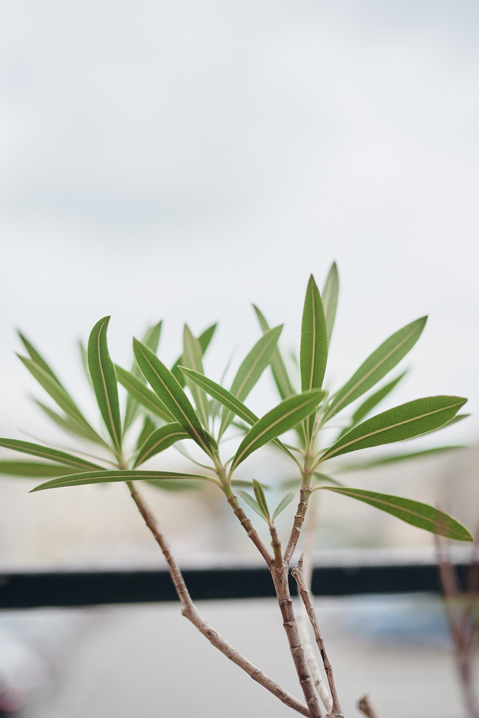 détail d'une plante de la terrasse de coup'coeur