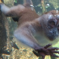 The Singapore Zoo, a breakfast, and a Behind the Scenes Tour