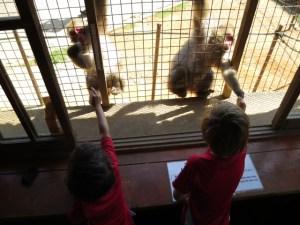 monkeys at arashiyama
