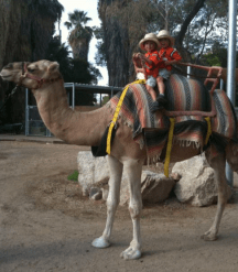 two kids riding a camel