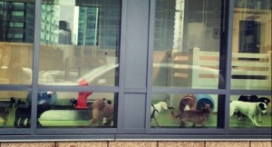 city dog seattle