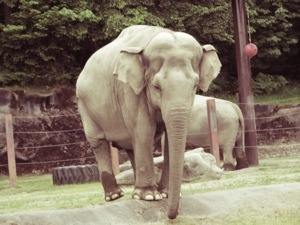 elephant at point defiance zoo