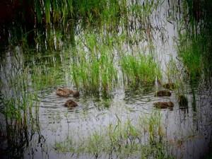 birds at the wildlife refuge