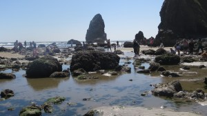 looking for puffins at Cannon Beach in oregon with kids