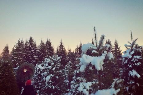 farmer browns christmas tree ucut near seattle