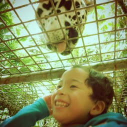 belize zoo with kids private tour in jaguar cage