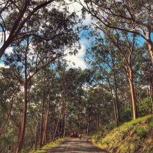 Driving with kids and searching for Koalas on the Great Ocean Road