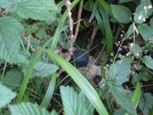 Fungi, unidentified, July 2012