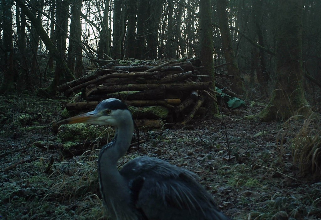 Bird, Heron, January 2015