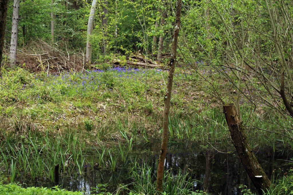Pond, nature, April 2017