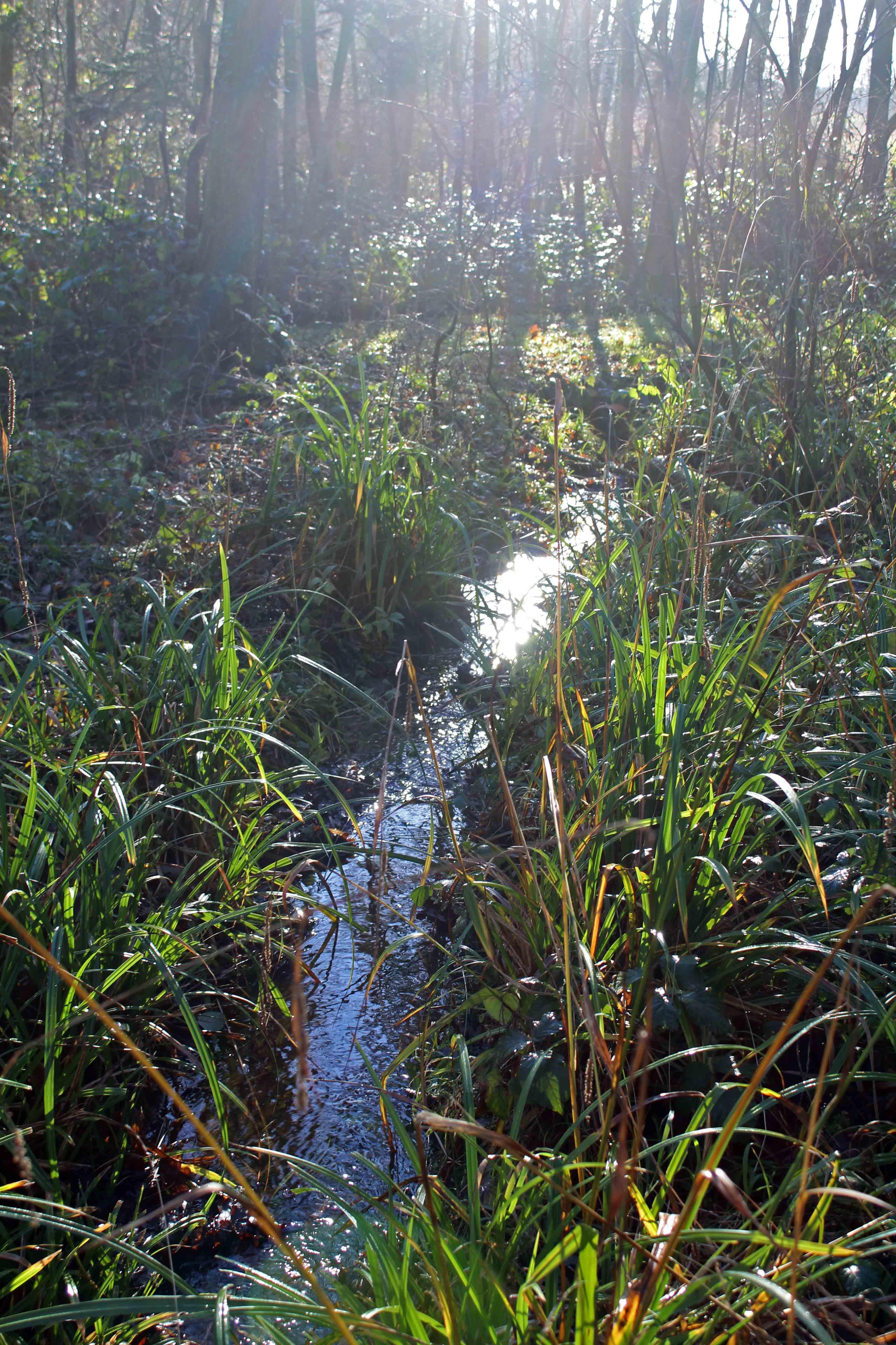 Nature, ditch, December 2017