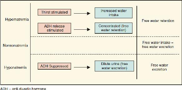 29+ Electrolyte Free Water Clearance Hypernatremia Gif
