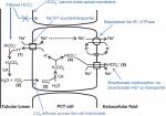 Chapter 70 – Acid–Base Physiology