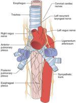 Anatomic Correlates of Physiologic Function