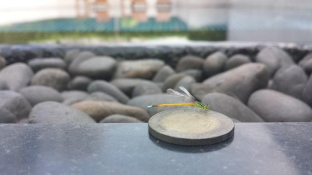 Insekt med pool i baggrunden