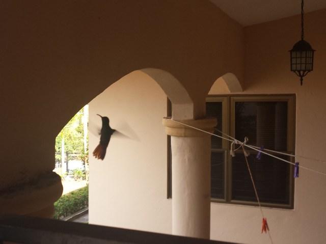 Kolibri2 (beskaaret)
