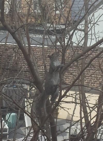 Egern2 (klippet)