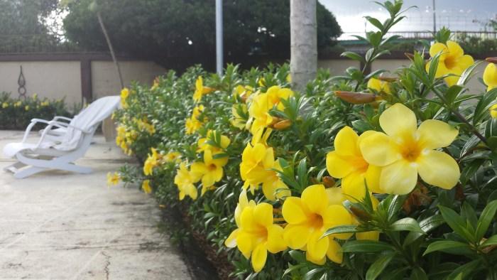 Vores nye hus gule blomster3