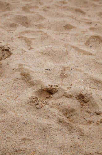 Fodspor i sand