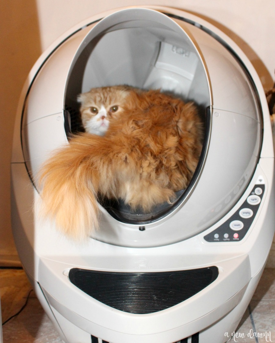 Cat sitting in litter robot
