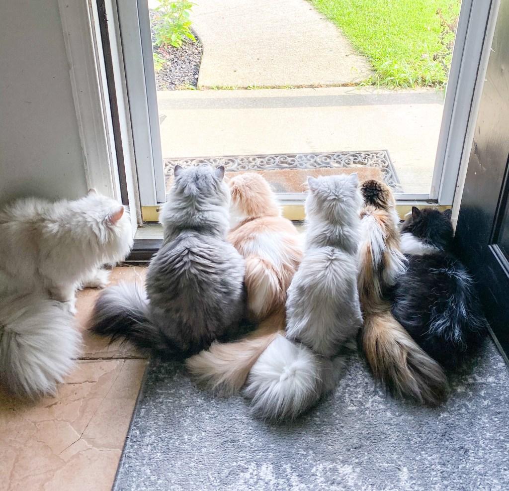 kittens sitting by door