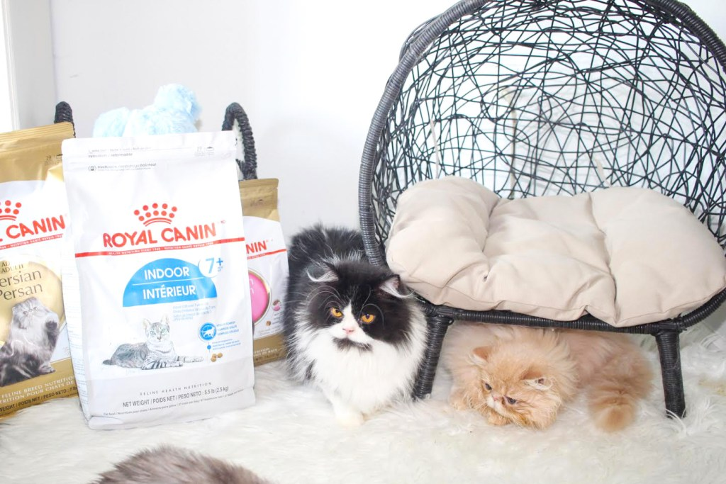 Persian kittens by bags of cat food