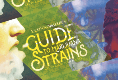 cannabis strains infographics