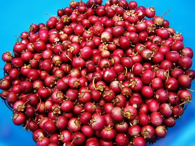Cranberry Juice and Urinary Tract Infections