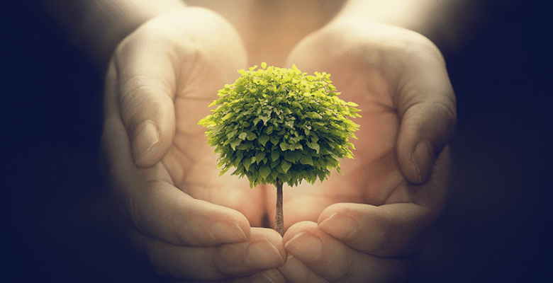 Holding a tree, growth