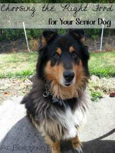Choosing the Right Food for Your Senior Dog Part 2