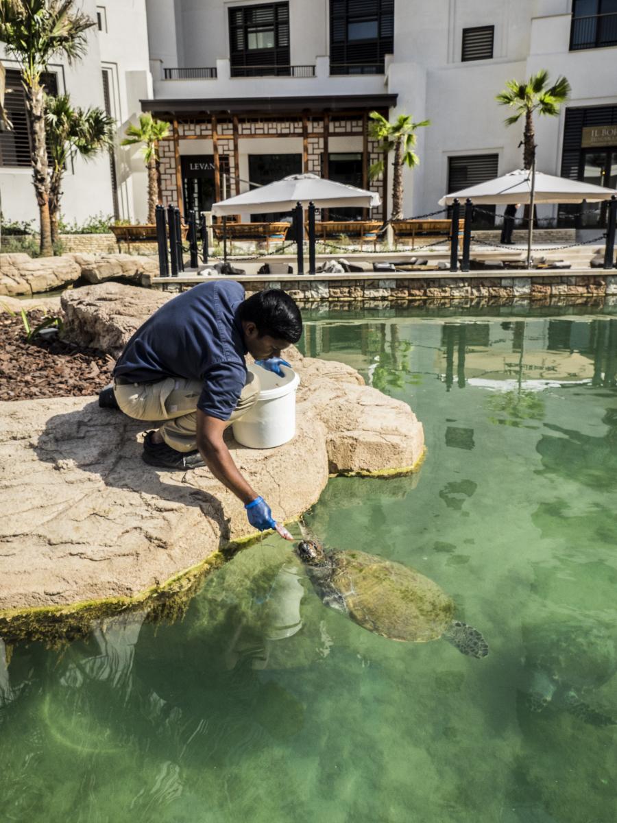 aneesh-feeding-al-naseem-turtles-jan-2017-7