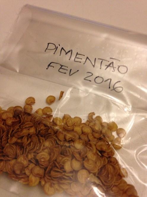 Sementes separadas de pimentões orgânicos. Foram secas e, agora, embaladas. Quando esquentar, serão plantadas. ®SKLindemann