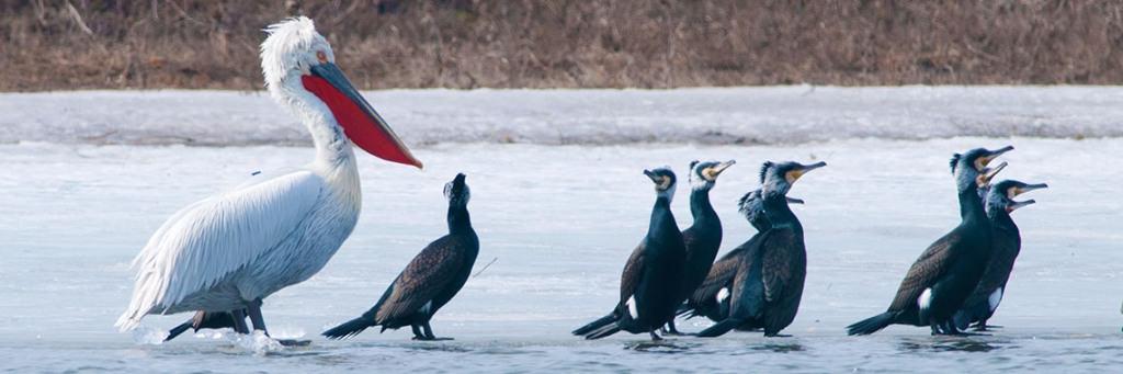 Delta Dunarii în imagini