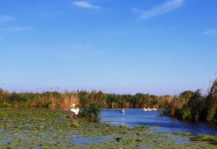 permise pentru Delta Dunării