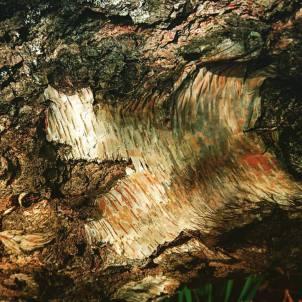 Orange and green tones of bark.