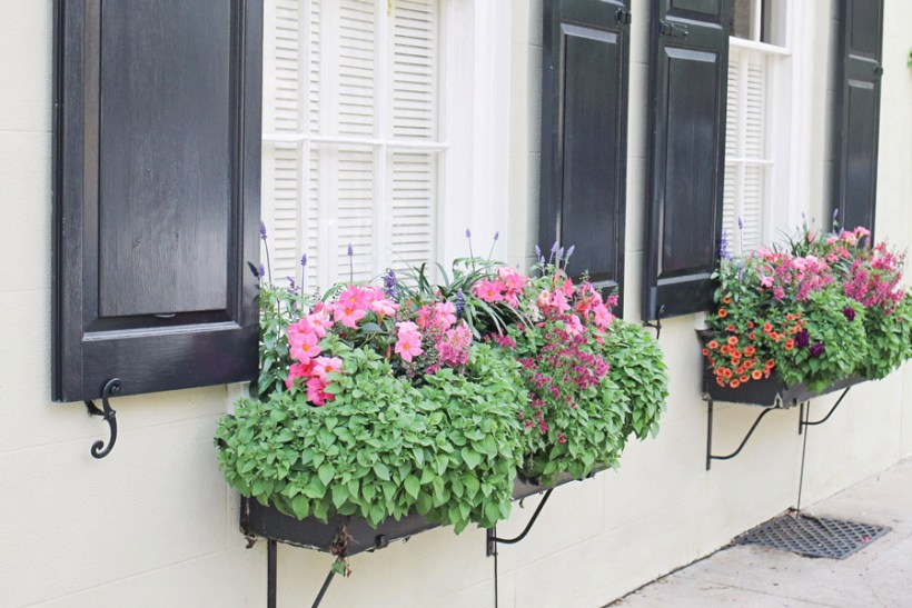 Charleston window flower box