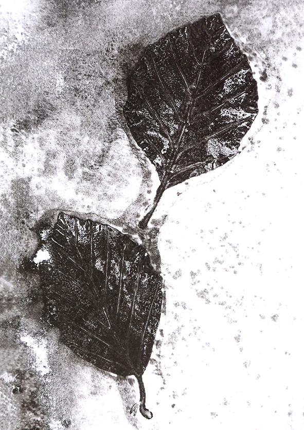 beuk Leafprint Black white, Natuurlijk Angelart, Angela Peters. Illustraties inkt Aquarel