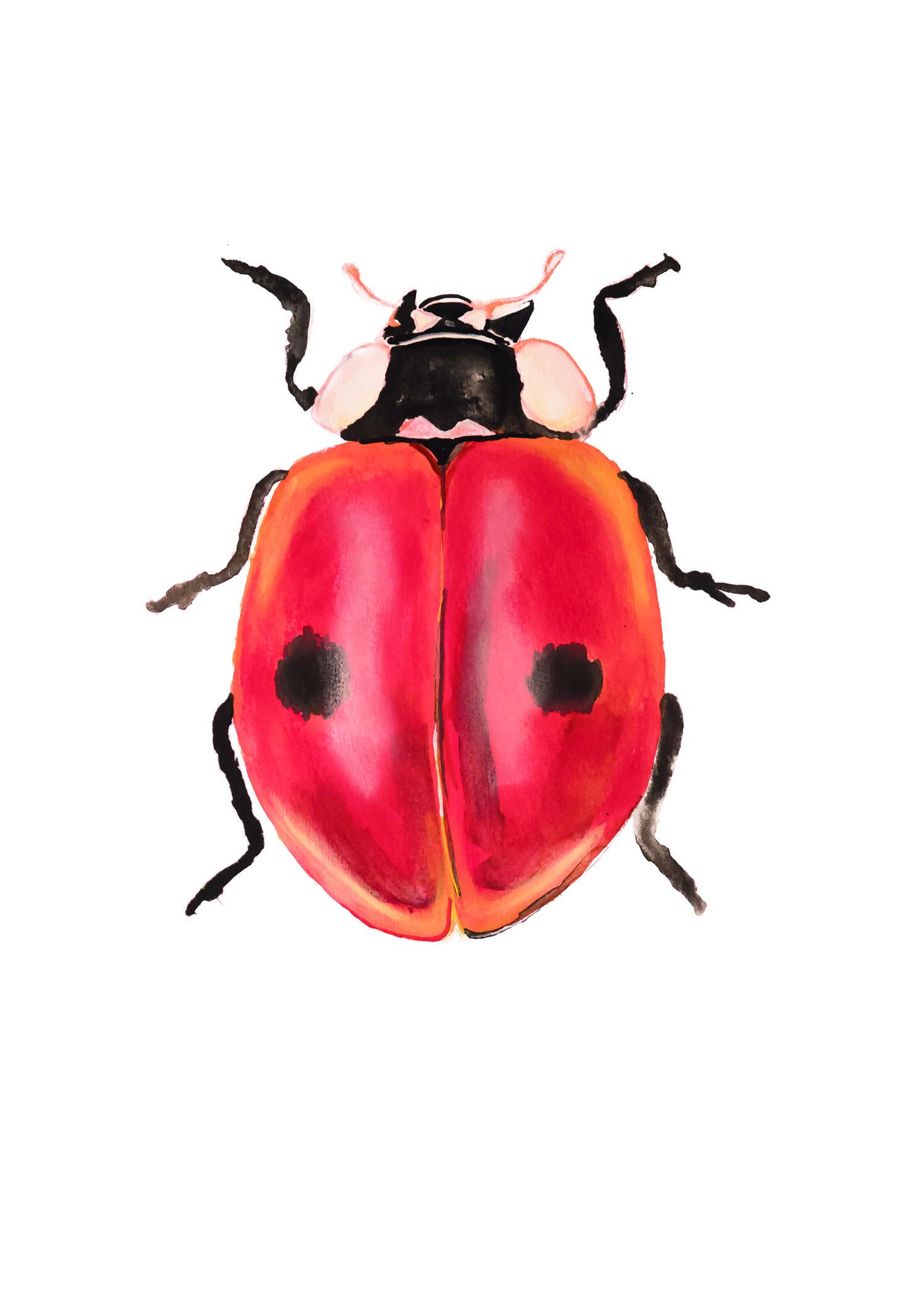 lieve heersbeest Ladybird, Natuurlijk Angelart, Angela Peters. Illustraties inkt Aquarel