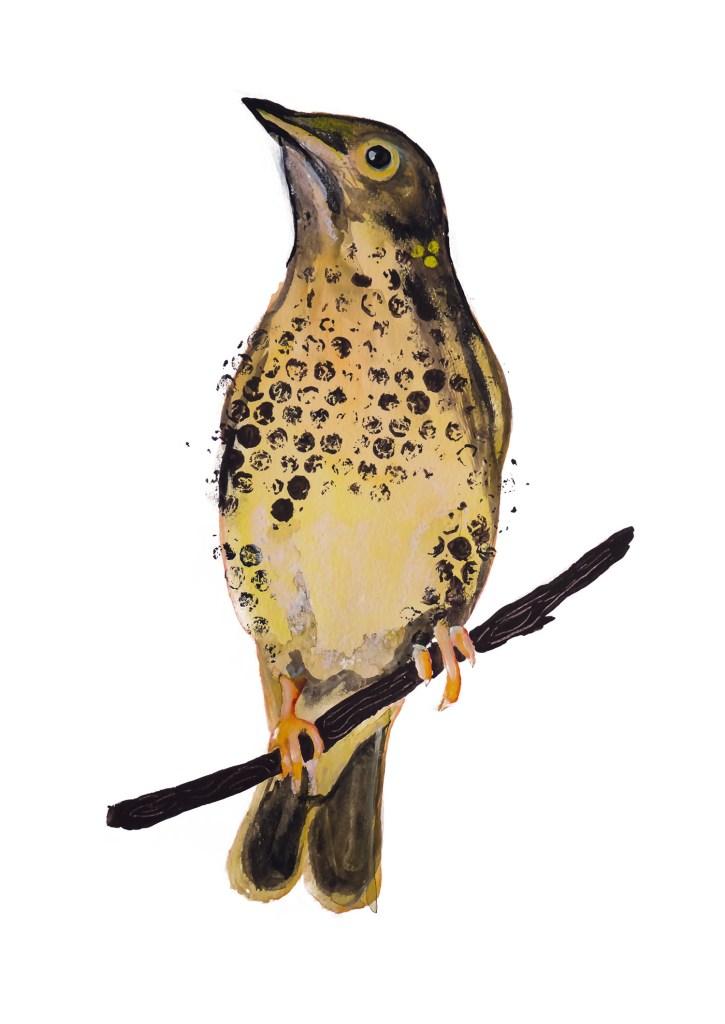 Spreeuw, bird, vogel, animal dieren print, Natuurlijk Angelart,
