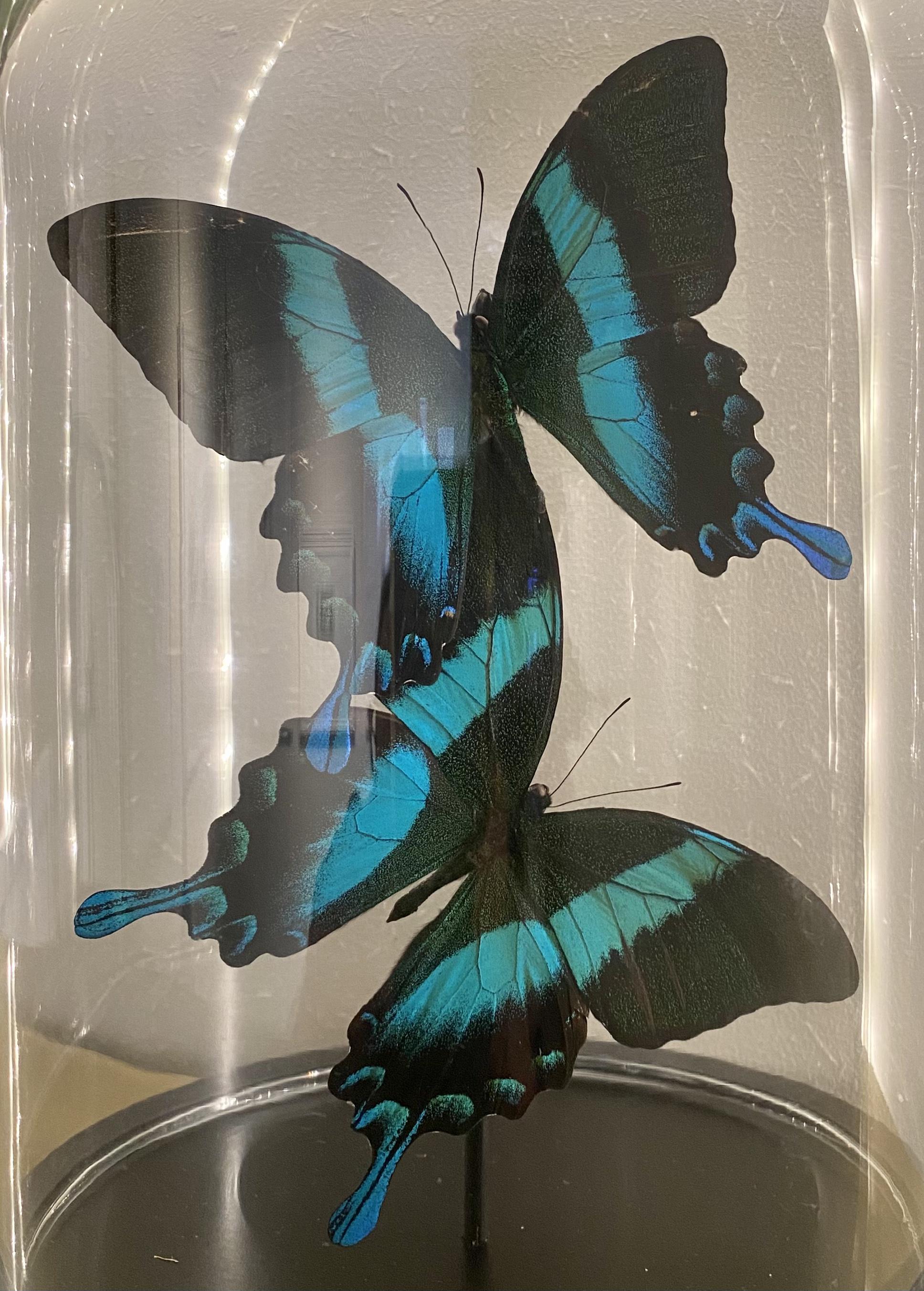 Vlinders van Caligocreations bij Angelart kunst&Zo Angela Peters Blumei