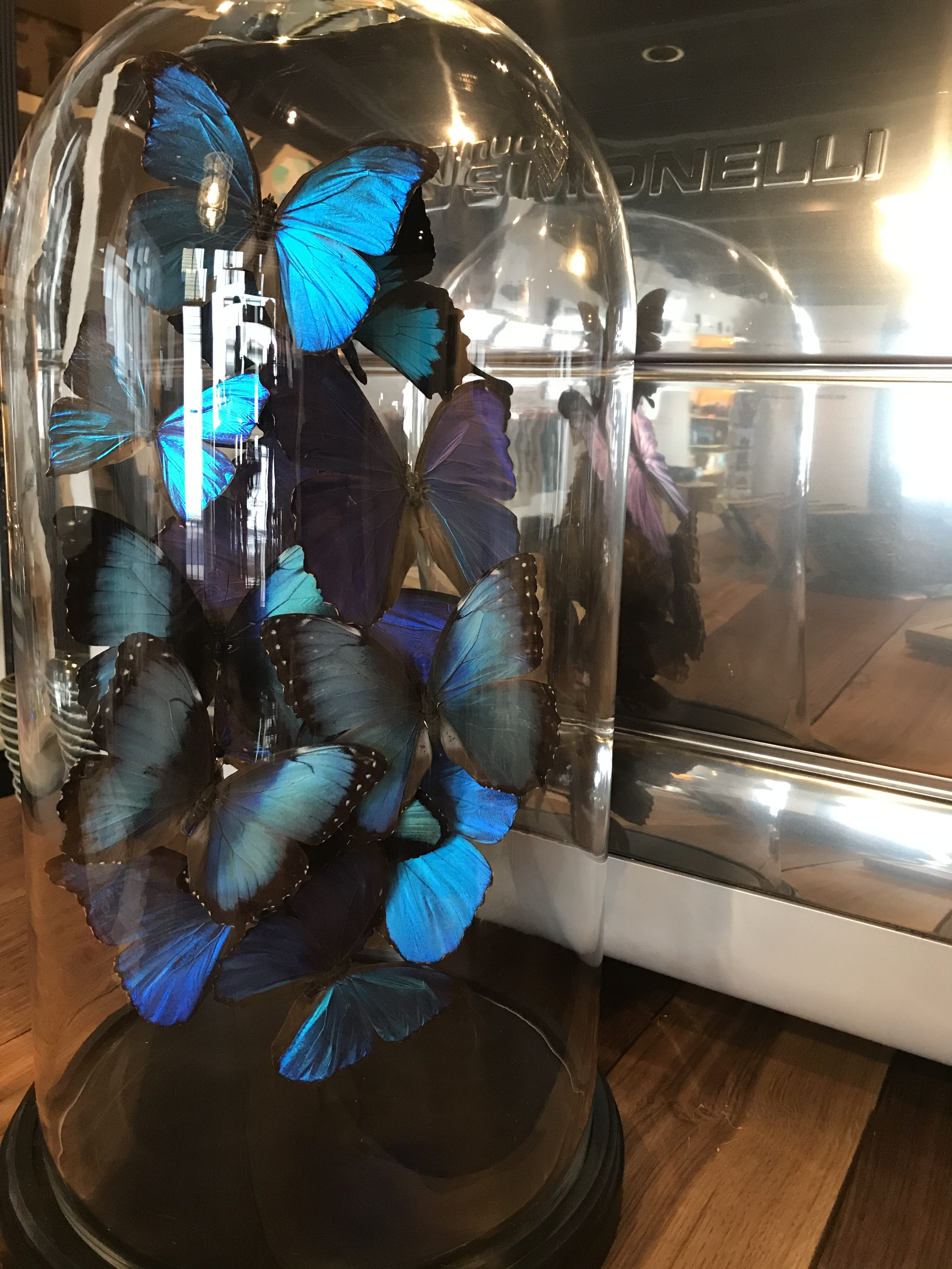 Vlinders CaligoCreations