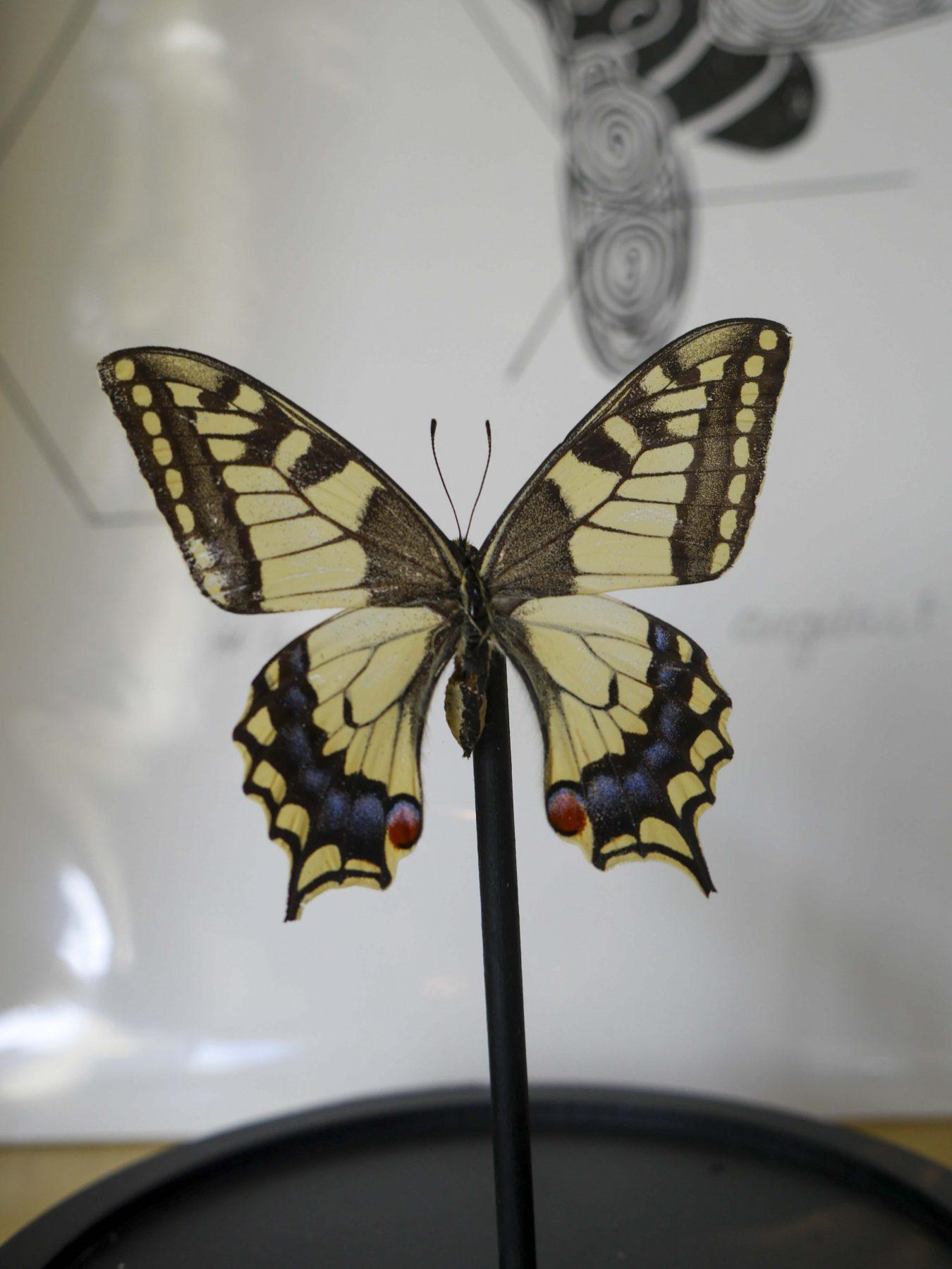 Vlinders van Caligocreations bij Angelart kunst&Zo Angela Peters
