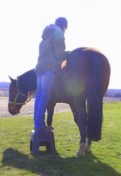 Equine massage