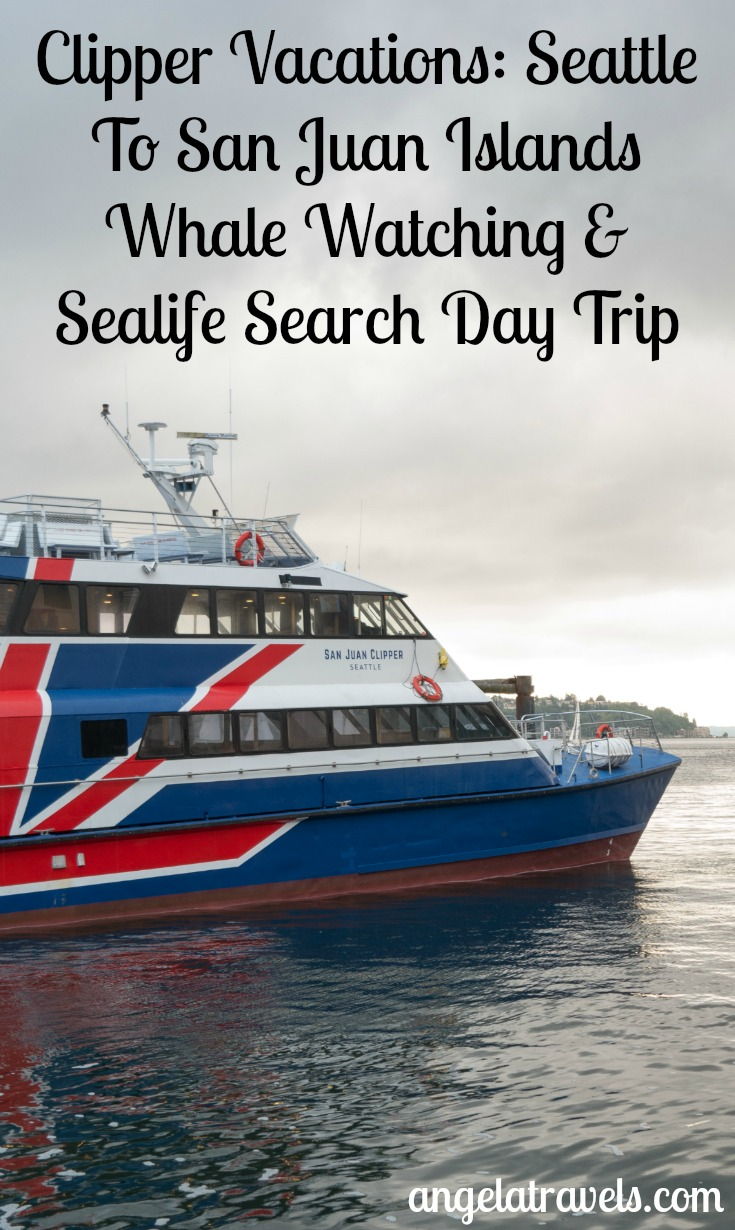 Go on a tour with Clipper Vacations: Seattle To San Juan Islands Whale Watching & Sealife Search Day Trip