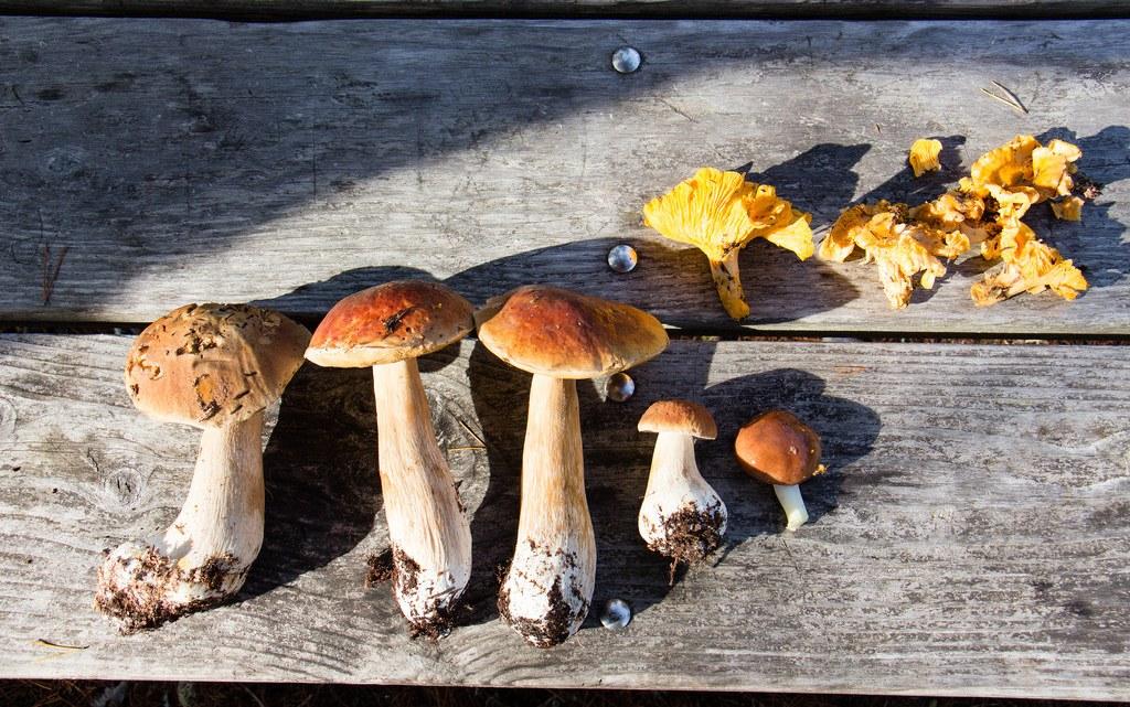 Mushroom Foraging